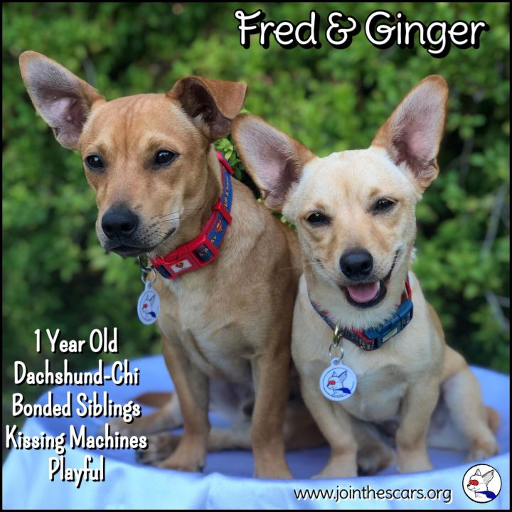 Ginger (and Fred) 4