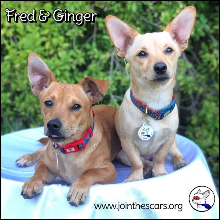 Ginger (and Fred) 5