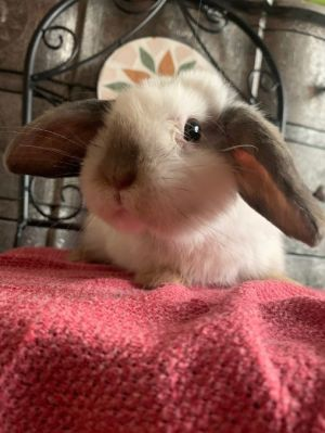 If you are interested in adopting Filipe please inquire here on Petfinder or contact us at infobun