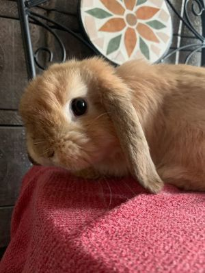 If you are interested in adopting Emma please inquire here on Petfinder or contact us at infobunny