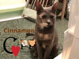 Cinnamon is the young mom to Pepper She is very laid back They are both looking for their furever