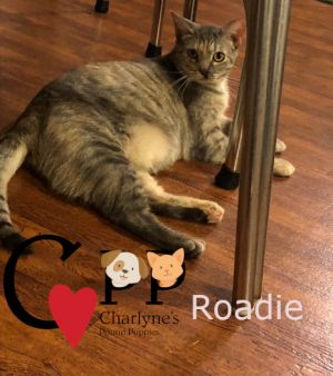 Roadie was pitched from a vehicle on the highway when she was a baby October 2019 Our wonderful vet