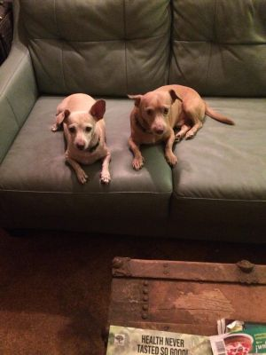 We are Cookie and Snickers We are such an adorable couple And are a bonded pair around 5 Cookie i