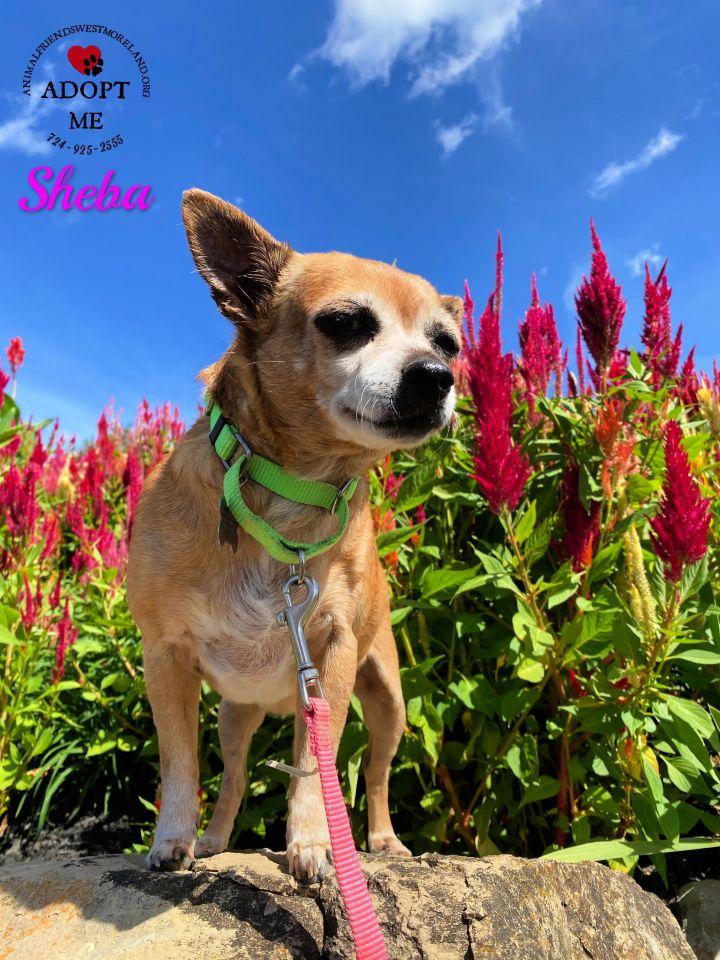 Sheba 4