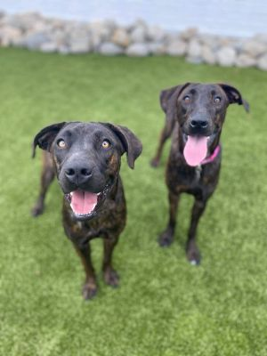 TO APPLY GO TO wwwLuckyDogRefugecom Not bonded Meet our sweet southern sisters Winnie and Tig