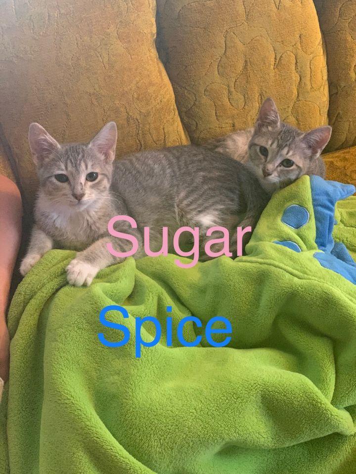 Sugar (female)/Spice (male) bonded pair 1