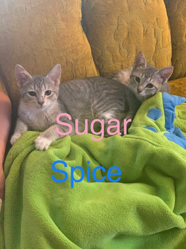 Spice (male)/Sugar (female) bonded brother/sister