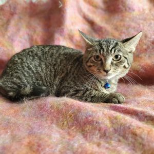 This is Duncan Hes a sweet and handsome young boy rescued from a colony in Harlem along with his
