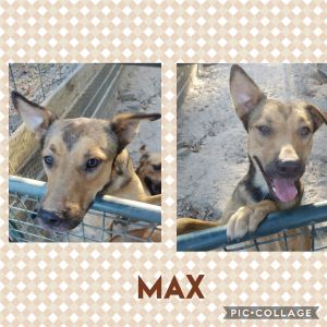 Max and his two sisters Lucy and Mary are looking for a home that will give them LOTS OF TLC