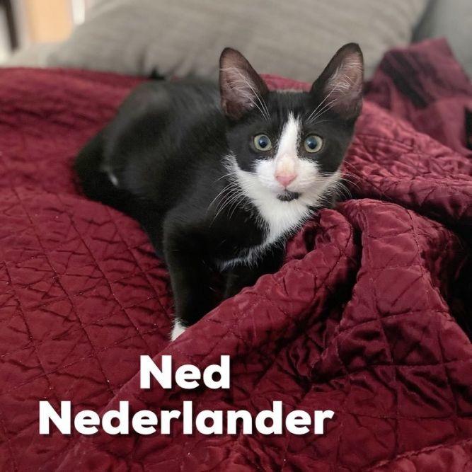 Ned - Nederlander