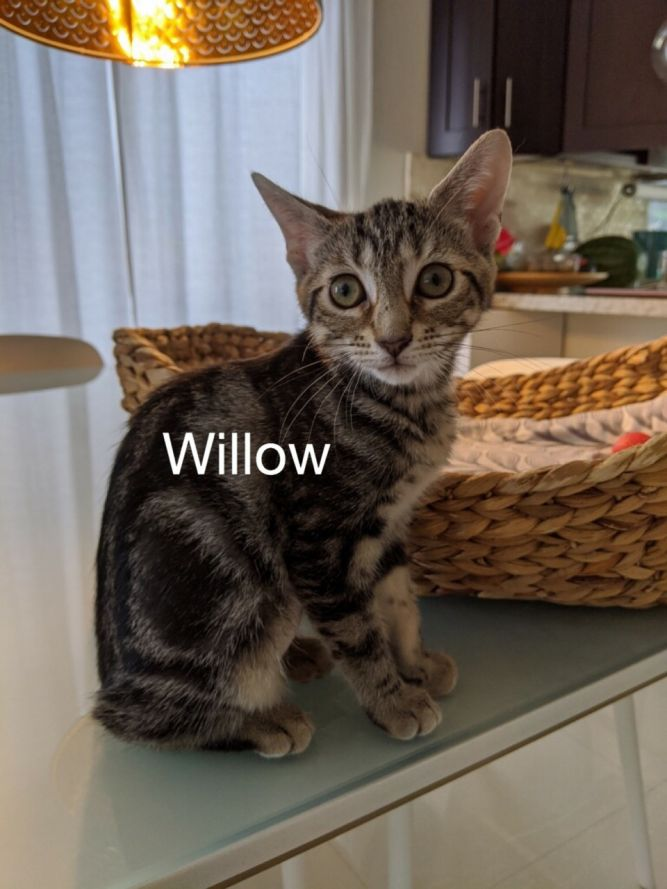 Willow