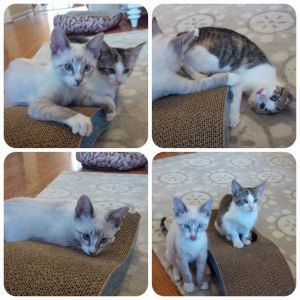 Autumn and Winter AKA Arya  Ghost were adopted together they were kittens They need a new home u