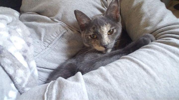 Henrietta A-2012 5