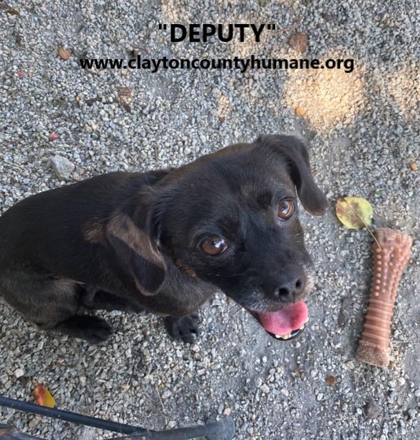 Deputy 2