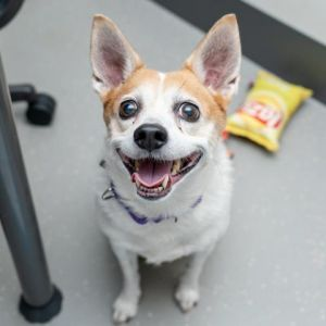Aurora is a sweet senior gal looking for a new home to call her very own Despite her age she