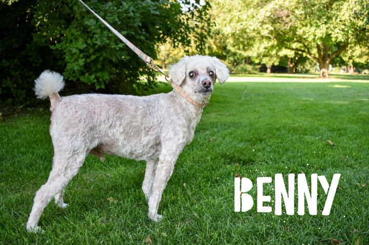 Benny 4