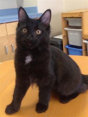 ?bust=1599867621&width=300 - Adopt a Cat