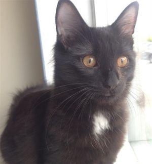 ?bust=1599867622&width=300 - Adopt a Cat