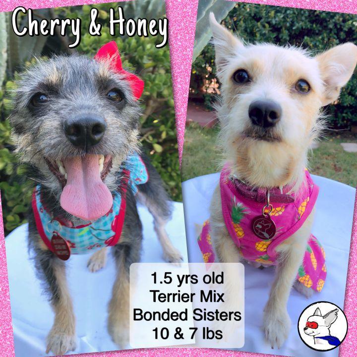 Honey (and Cherry) 3