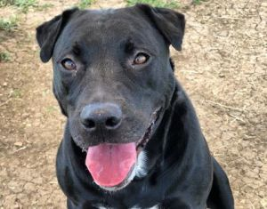 Double-Stuff Oreo as her fans at the shelter affectionately call her is a mature lady that likes n