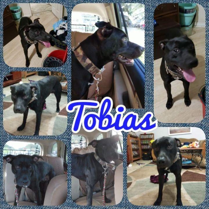Tobias 1