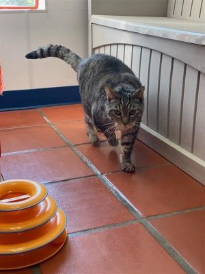 DOH Looks like Homer ate one too many donuts Our senior cat Homer came to us very happy and over