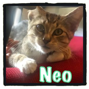 Meet Neo the adorable And dog friendly kitten Sweet Neo lives with a sweet and playful dog in his f