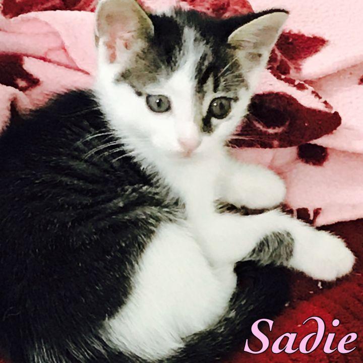 Sadie 1