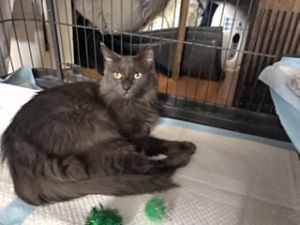 Meet Gorgeous Smokey Girl Smokey was rescued from the street Maybe she was tos