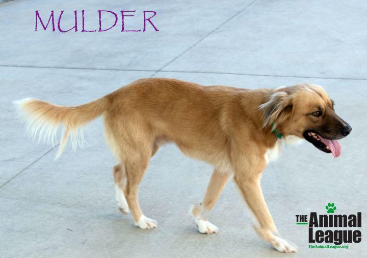 Mulder 2