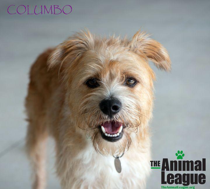 Columbo 1