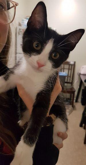 ?bust=1600099839&width=300 - Adopt a Cat
