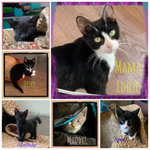 Meet Sweet Mama Eddie and her 6 beautiful babies Mama Eddie is an extremely friendly young cat who