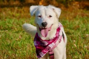 You can fill out an adoption application online on our official websiteWillow GA is a female Labr
