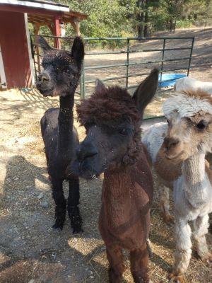 Rachel, Clarise & Cassiopeia
