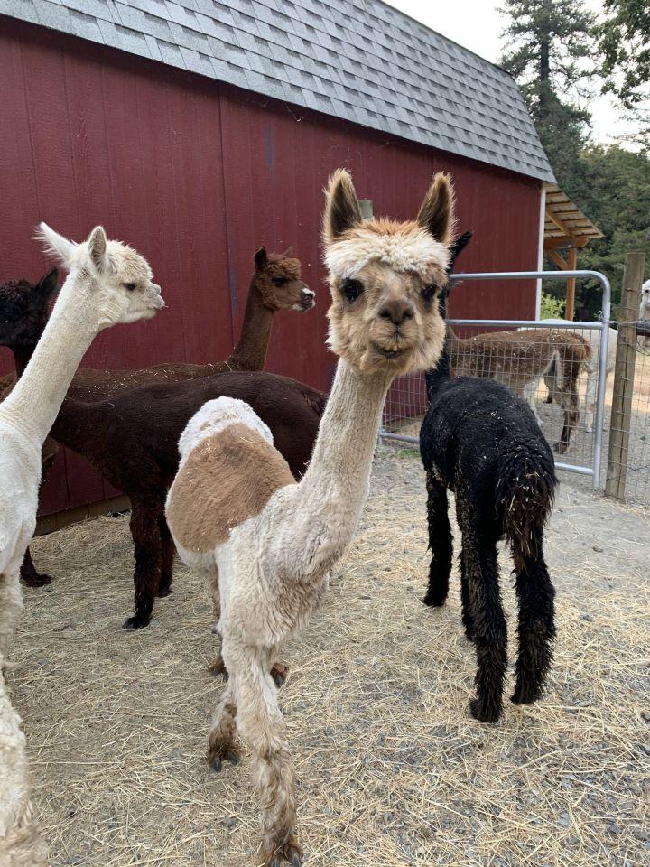 Rachel, Clarise & Cassiopeia 5