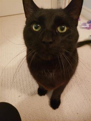 ?bust=1600179918&width=300 - Adopt a Cat