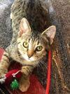 ?bust=1600180912&width=100 - Adopt a Cat
