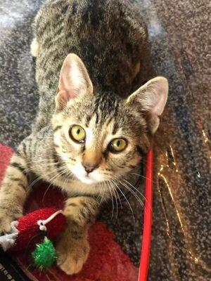 ?bust=1600180912&width=300 - Adopt a Cat