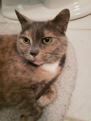 ?bust=1600180905&width=300 - Adopt a Cat