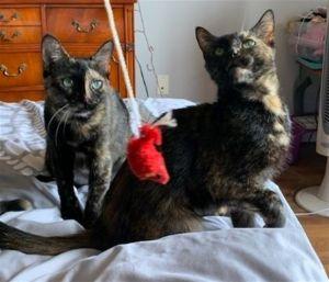 ?bust=1600185434&width=300 - Adopt a Cat