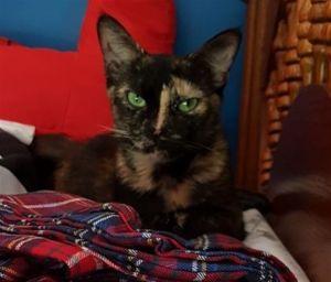 ?bust=1600185435&width=300 - Adopt a Cat