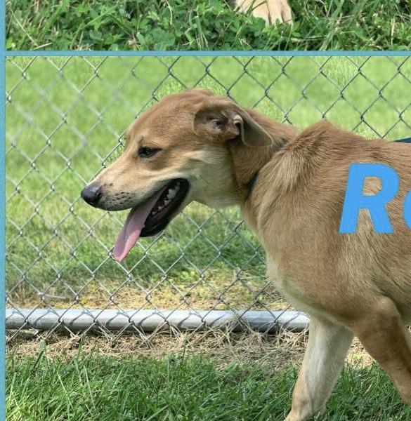 Roy 3