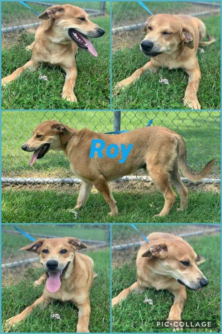 Roy 4