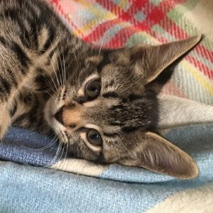 Martin is a healthy bouncy busy little boy with a typical kitten attitude His