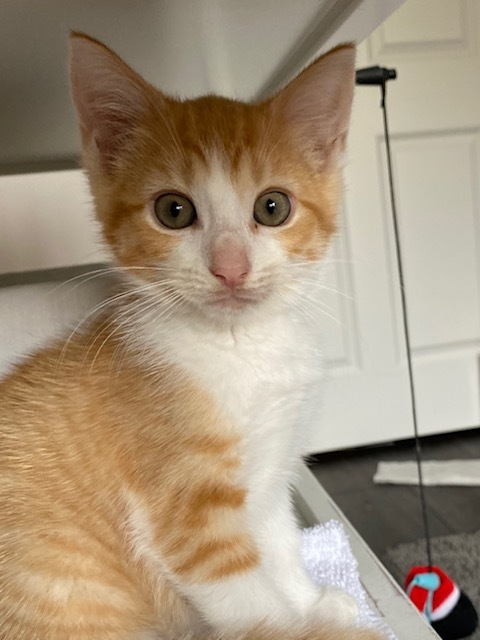 Butterfly-Reduced Adoption Fee 3