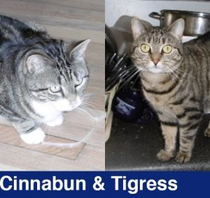Cinnabun and Tigress are two adorable older cats looking for a quiet home where they can watch birds