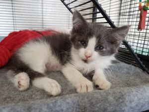 Huey and his siblings were rescued from someones backyard in West New York NJ They are super affe