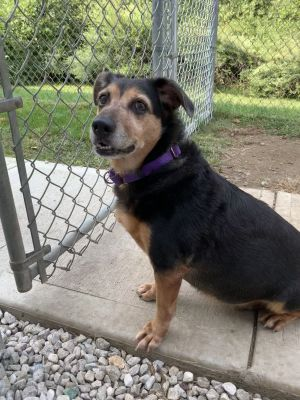Mimi is a 35 pound 10 year old Dachshund mix Her owners moved and couldnt take