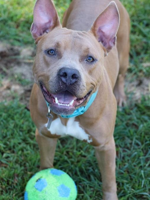 Chance, an adoptable Mixed Breed in Athens, GA
